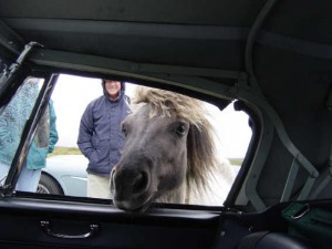 Guess What is this horse thinking about